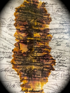 Notes from herbalist meeting--II