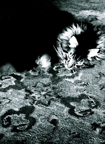 Cat on Wool Carpet from India (Dreaming of Continents), b&w